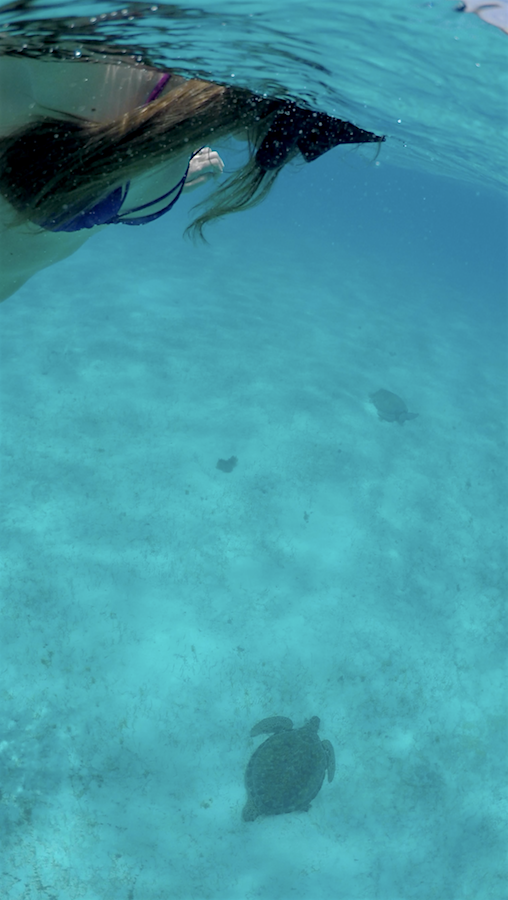 swimming with turtles - barbados