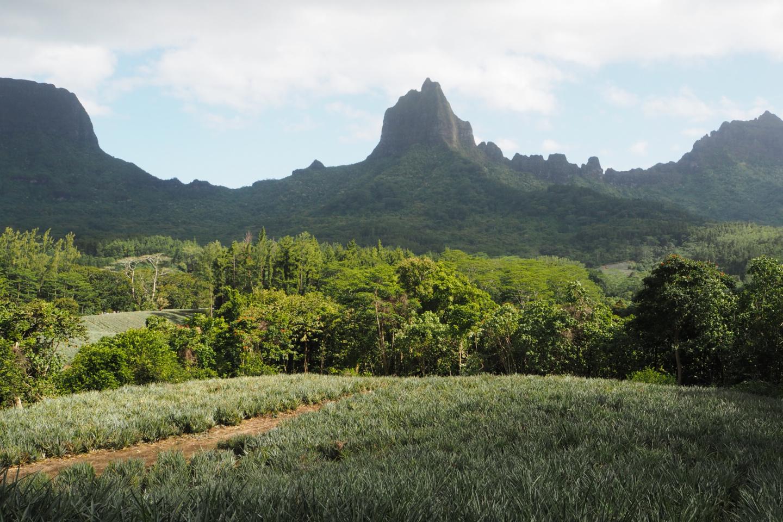 Guide to Moorea Tahiti