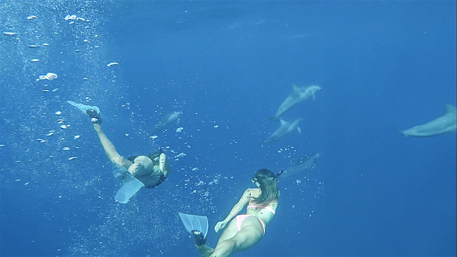 swimming with humpback whales moorea tahiti